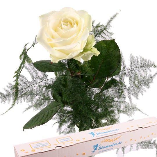 Weie Rose  ein Symbol fr reine Liebe und zrtliche