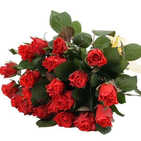 Rosenversand rote Rosen im Bund  rote Rosen online
