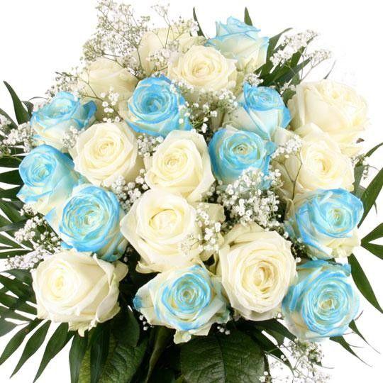 Blaue Rosen und weie Rosen online bestellenkaufen und