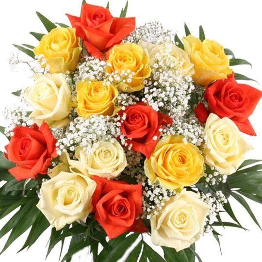 Rosenversand  Sie whlen Farbe  Anzahl  Rosen online