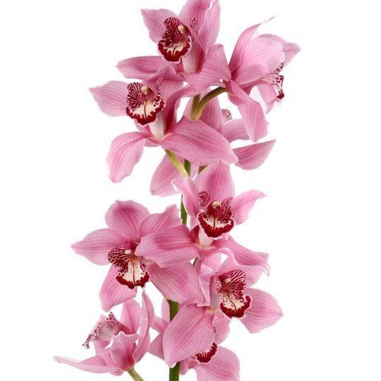 Blumen Verschicken Rabatt