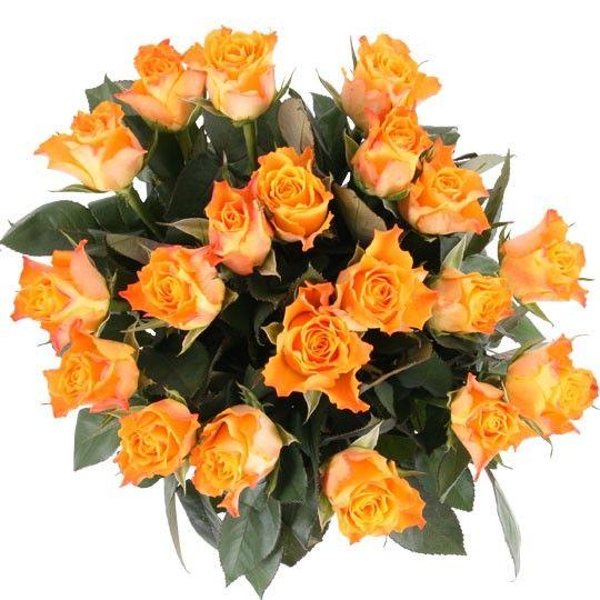 20 30 50 Rosen  Farbe und Anzahl selbst whlen