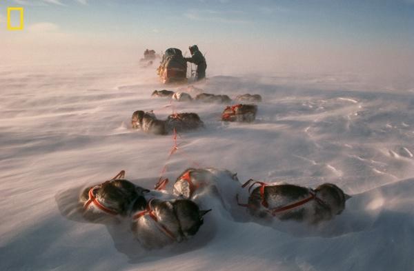 07 Antarctic 462755