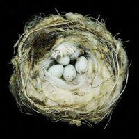 Media Catalog Product Cache 1 Image 250X 040Ec09B1E35Df139433887A97Daa66F N E Nests