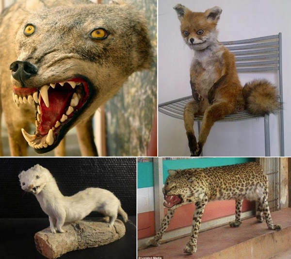 BadtaxidermyMash