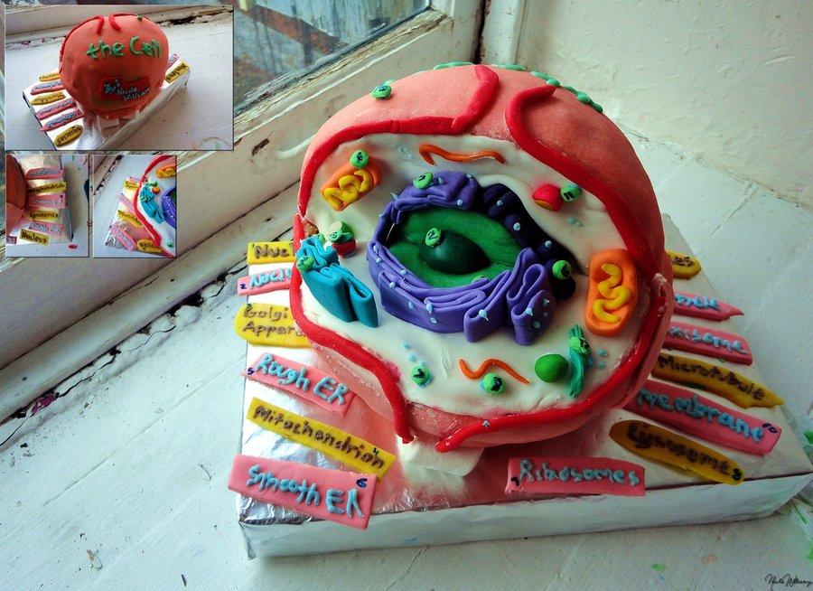 Cell model cake