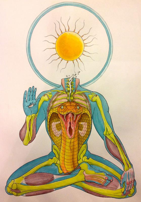 Reflected anatomical illustrations
