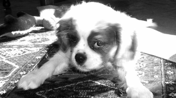 Molly as a puppy