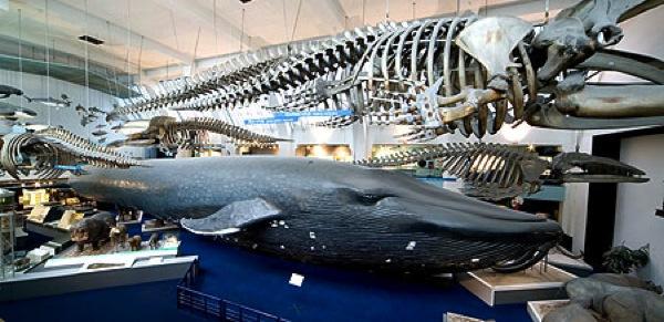 Whale5400 450x219