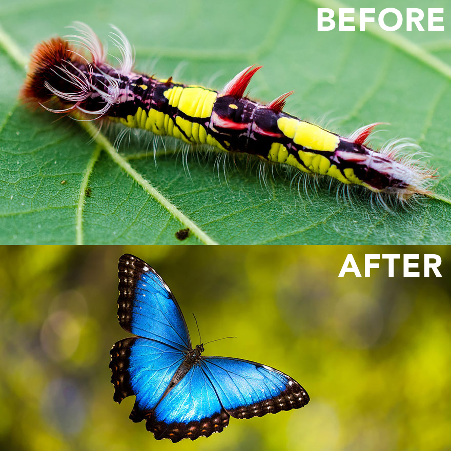 Exotic Caterpillars And The Beautiful Winged Insects They Become    Boing Boing