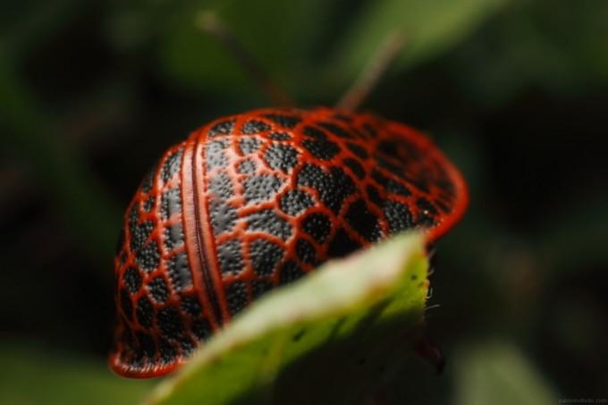 pablo-moltedo-caparazon-rojo