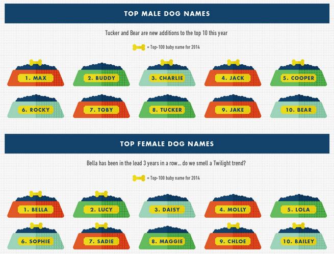 rover-com-dog-names