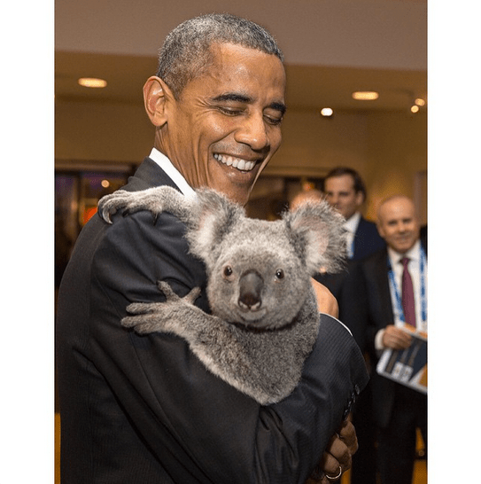 """President Obama holds a koala before the start of the G20 Summit in Brisbane, Australia."" By Pete Souza via Instagram"