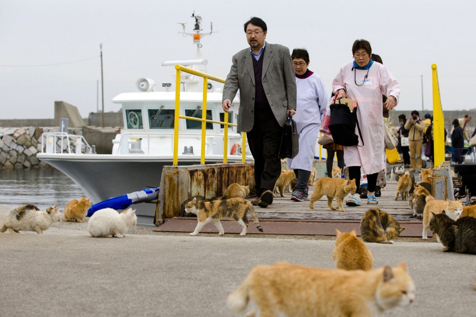 Cats surround people as they get off a boat at the harbor on Aoshima Island, Japan, on February 25, 2015. Thomas Peter/Reuters