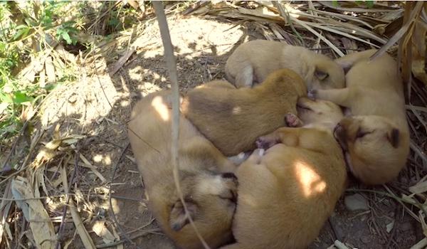 five-puppies01
