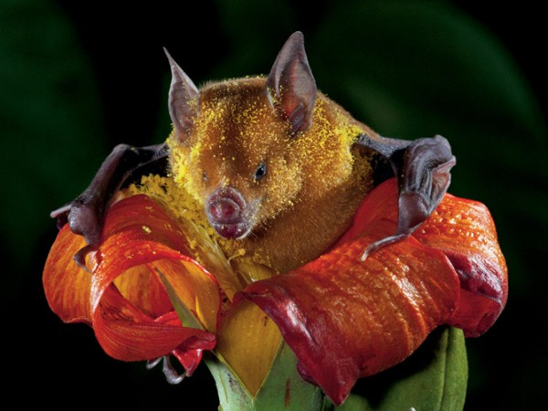 05-pollen-dappled-bat-670