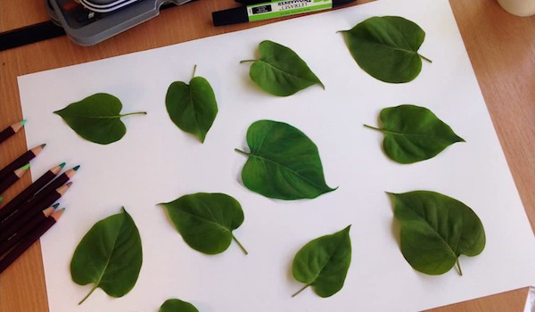 leafdraw01