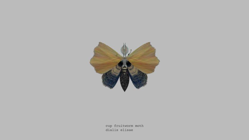 mothgen2
