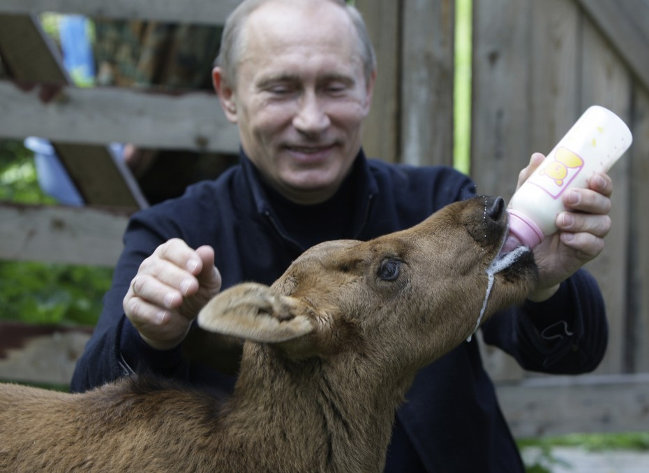 Putin feeds a young elk at the national park 'Losiny Ostrov' (Elk Island) in northeast Moscow, June 5, 2010.  [Reuters]