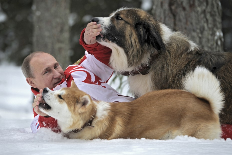 Putin lies on the snow during a walk with dogs in Moscow Region, March 24, 2013. [Reuters]