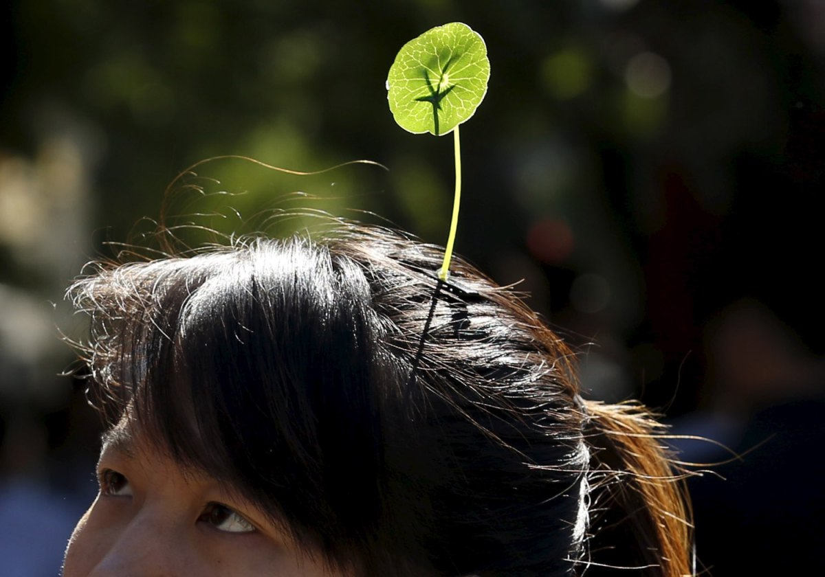 An odd new headwear trend is sprouting in china boing boing for Xeni jardin 2015