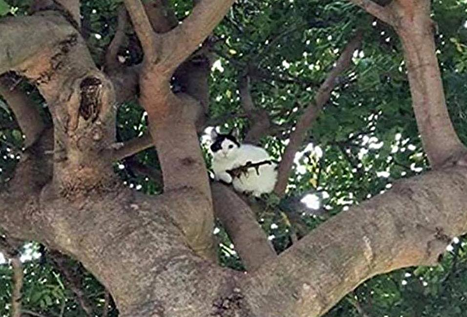 """Oregon cops issue """"verbal warning"""" to armed cat in a tree"""