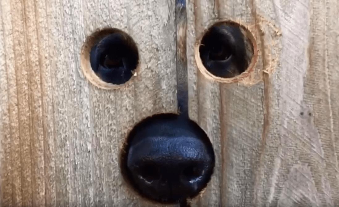 Neighbor Shot My Dog What Can I Do