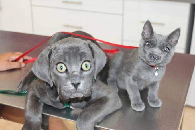 These Dog And Cat Face Swaps Are Creepy Boing Boing