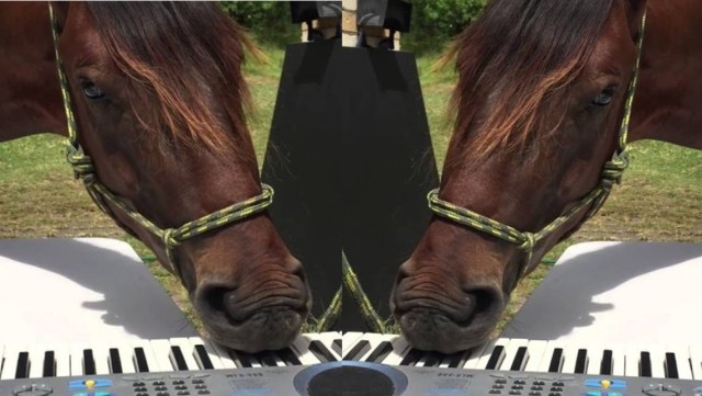 Horse enjoys playing synthesizer with his mouth