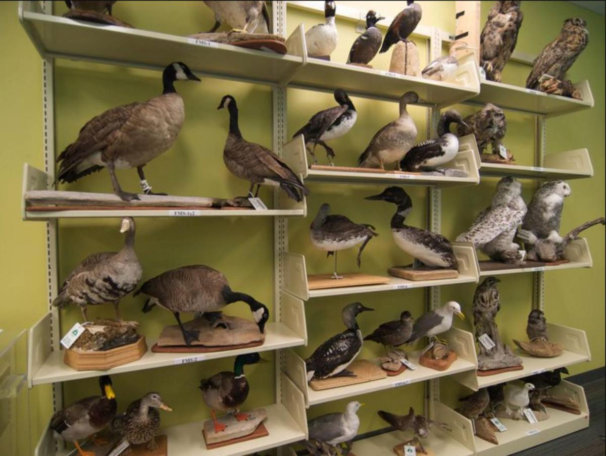 Library loans taxidermy animals for science and Harry Potter-themed birthday parties