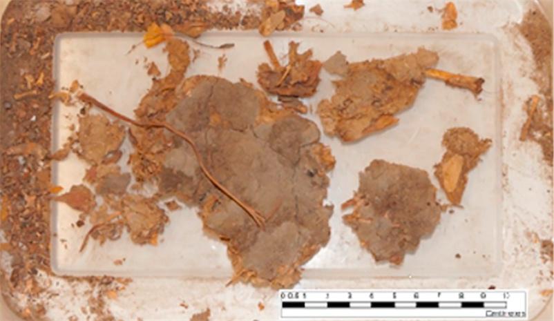 Prehistoric poop reveals person ate entire venomous snake, including a fang