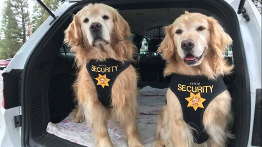 'Mueller' the Golden retriever is now mayor of this Southern California town