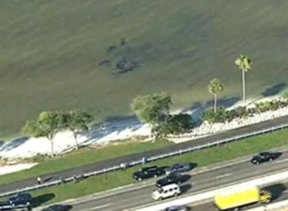 Manatee orgy causes traffic jam in Florida