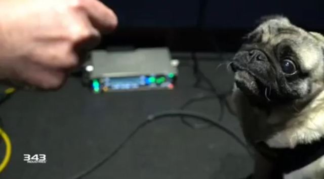 Listen to this pug provide unearthly noises for the next Halo video game