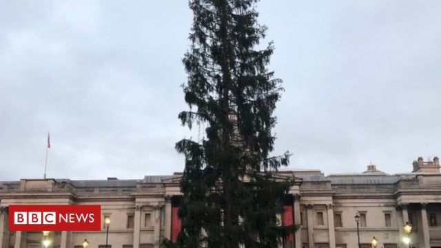 Norway gifts Britain amusingly sparse Christmas tree