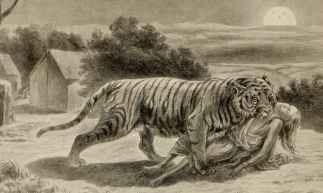 In 1907, hunter Jim Corbett stalked a Nepalese tiger that had killed 434 people