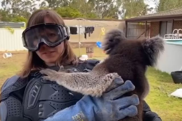 Scottish reporter covering Aussie bush fires gets to meet a drop bear