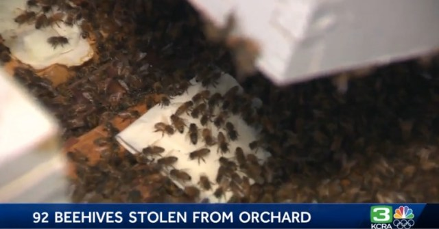 Bee thief nabs 92 hives from California almond orchard