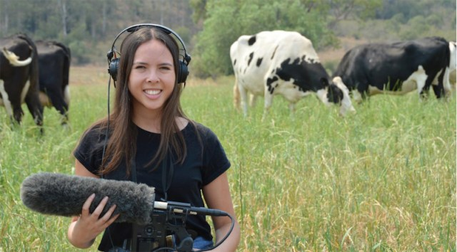 How cows use their unique voices to cowmoooonicate