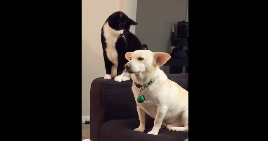 Cat considers bopping dog, eventually makes a decision