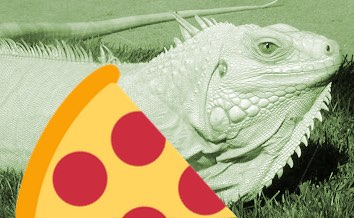 Large iguana found in freezer of pizza restaurant in Florida