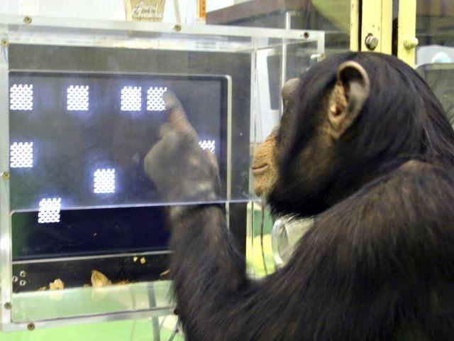 Chimp memory test Tetsuro MatsuzawaPrimate Research InstituteAP