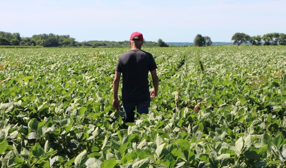 Farmer Terry Davidson walks through his soy fields July 6, 2018, in Harvard, Illinois, the same day China imposed retaliatory tariffs aimed at the US soybean market. - Davidson, 41, is a fifth generation farmer, a Democrat among mostly Republicans. He expects to be farming long after the US-China trade tariffs become a distant memory.