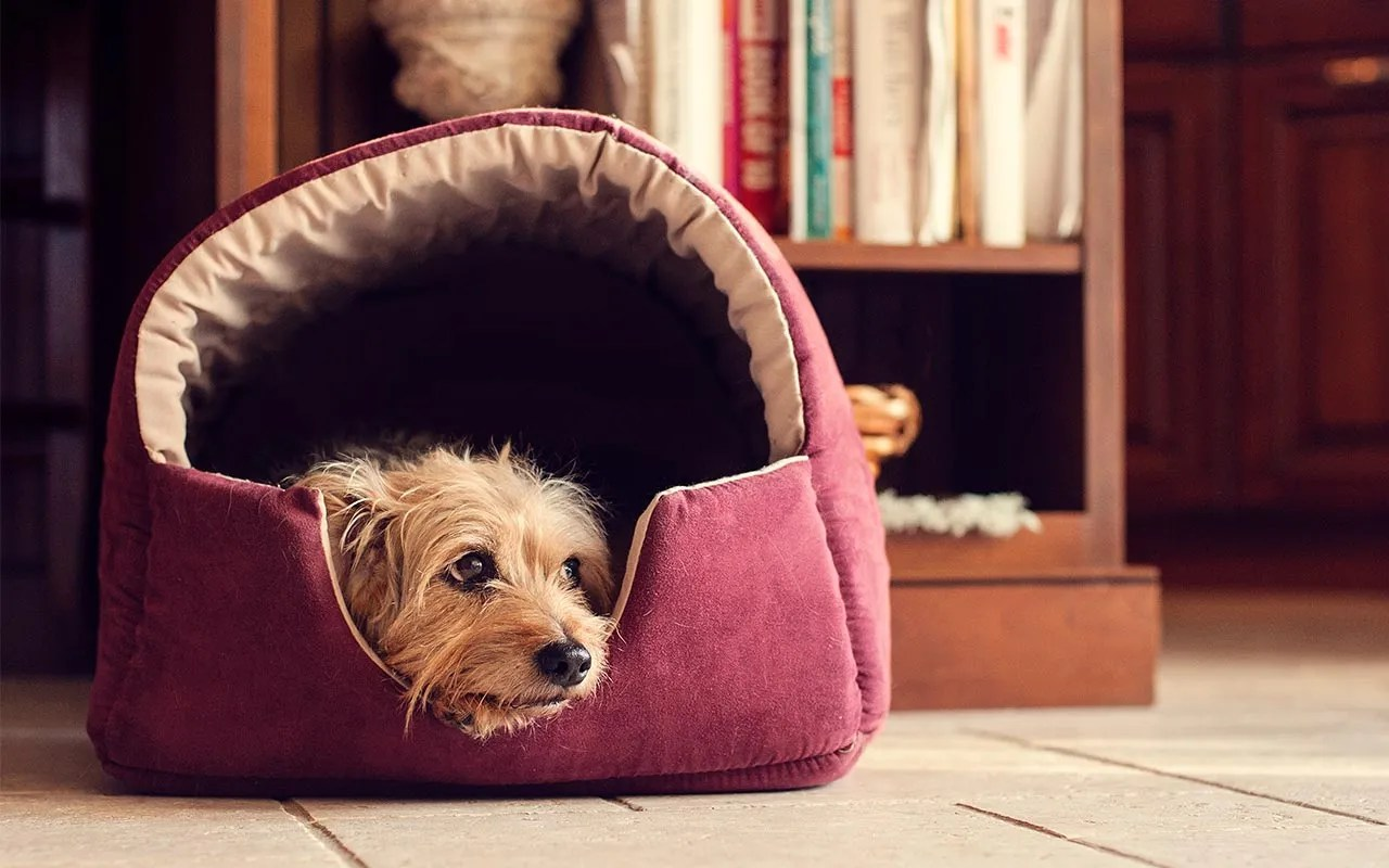aspen pet sofa bed for dogs cats assorted colors couches 10 hot gifts that new homeowners actually want