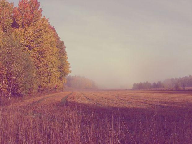 höstpromenad i skogen, åker på hösten