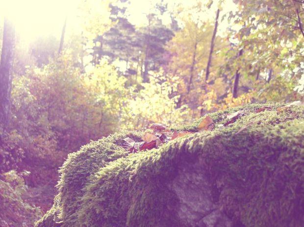 höstpromenad i skogen