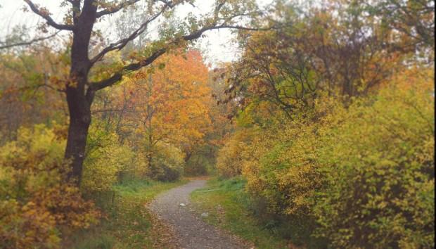 Höstdepression, en ofrivillig bloggpaus och en välbehövd skogspromenad