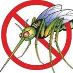 Public health issues warning over regional dengue