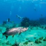 Cayman to host regional marine conference