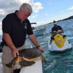 DoE rescues hawksbill turtle from fishing line
